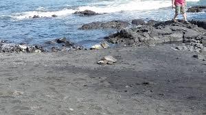 black sands beach picture of punaluu black sand beach island of