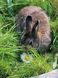 Rabbit Repellent For Gardens by Can I Use Mothballs To Keep Rabbits Out Of My Garden