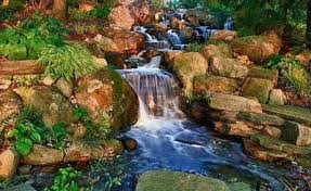 Is A Backyard Pond An Ecosystem Fish Ponds Backyard Ponds Pond Contractor Morris County Nj
