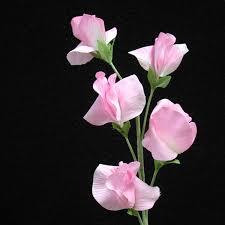 sweet pea flowers sweet pea light pink tattoo inspiration sweet pea