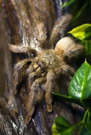 100 tarantula pet supplies amazon com 5 live thai micro