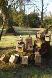 birds encouraging into the garden rhs gardening