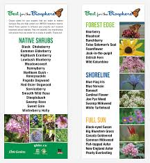 list of native plants resources bee city canada