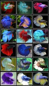 best 25 beautiful tropical fish ideas on pinterest tropical