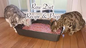 raw diet for cats recipe youtube