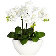 Fake Flower Arrangements Amazon Com Nearly Natural 4804 Phalaenopsis Silk Flower