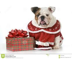 bulldog christmas cards christmas lights decoration