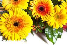 flower shops in bakersfield conroy s flowers bakersfield local florist in bakersfield ca