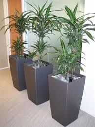 Plants For Office Office Landscape Design Plants By Design
