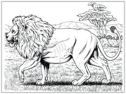lion coloring pages free adults sheets printable mountain lion