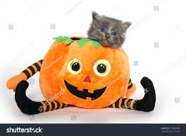 baby halloween background cute baby gray kitten sitting inside stock photo 317886308
