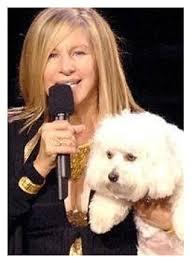 Barbra Streisand Meme - barbara streisand samantha celebrity pets pinterest barbra
