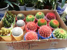 cactus garden ideas garden design ideas