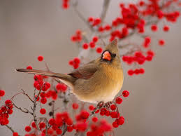 download wallpapers with birds gallery
