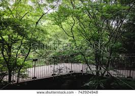 wood forest through walkway stock images royalty free images