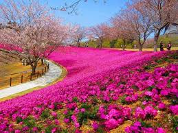 one of beautiful garden in the world nature pinterest