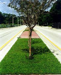 perennial peanut groundcover in a road median