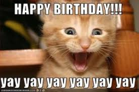 Birthday Meme Cat - happy birthday meme of cat happy birthday cat meme pinterest