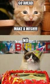Grumpy Cat Meme Happy Birthday - sad cat meme birthday image memes at relatably com