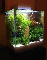 Betta Fish Decorations Fish Tank Ideas Healthy Fish Tank Decorations Tropical