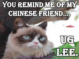 Memes Of Grumpy Cat - tard tartare sauce the grumpy cat not really grumpy at all