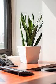 plant on desk desk plants osborne plant service