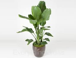 plants for office interior landscaping by everything grows