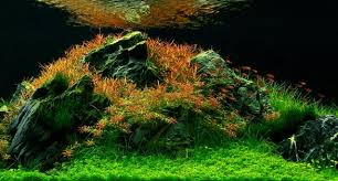 Aquascape Chicago Aga Aquascape Winners 2012