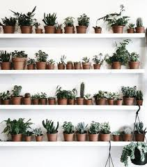 indoor plant display saturday job indoor plant display despoke