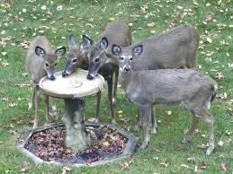 deer bird bath think i will put a bitd bath in my backyard nwar