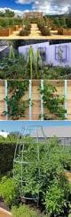217 best modern trellis images on pinterest arbors garden