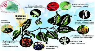 new insights and perspectives into biological materials for