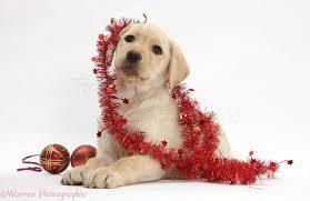 yellow christmas ornaments walmart u2013 b45a0d1d 4bff 45d4 a4fa