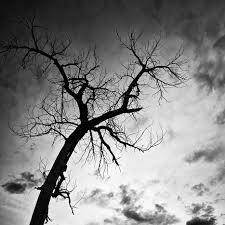 misha gregory macaw photography black tree no 1