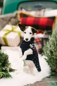 110 best pets at weddings images on pinterest pets at weddings