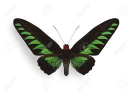 green tropical butterfly with shadow stock photo picture and