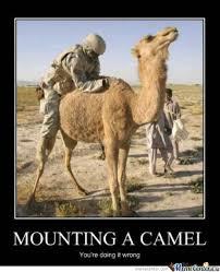 Camel Meme - sex with camel by zatel meme center
