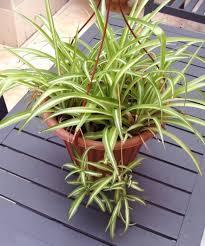 indoor plants singapore indoor outdoor plants for your flat propertyguru