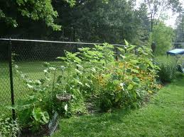 Decorate A Chain Link Fence Garden Chain Link Fence Decorations U2014 Bitdigest Design Creative