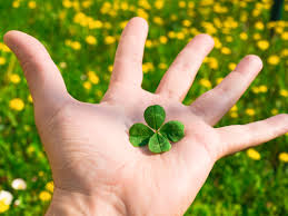 why are four leaf clovers lucky howstuffworks