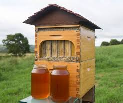 automatic honey collecting beehive beehive honey and bees