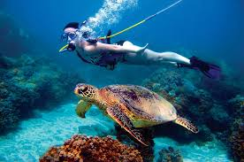 Hawaii snorkeling images Snuba maui go beyond snorkeling in hawaii jpg