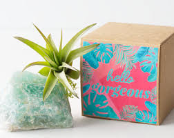 crystal air plants desk accessories birthday gifts by airfriend