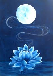 Blue Lotus Flower Meaning - best 25 blue lotus flower ideas only on pinterest blue lotus