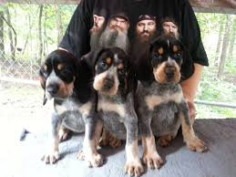 bluetick coonhound kennels in tennessee wagner u0027s so blue kennels