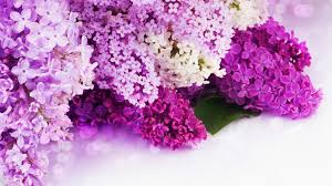 Best Place To Buy Flowers Online - 100 where to buy flowers online youtube made me buy it