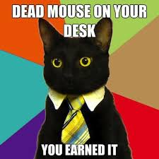 Business Cat Memes - business cat know your meme