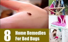Home Remedies For Getting Rid Of Bed Bugs Perfect Home Remedies For Bed Bugs On Home Remedies For Getting