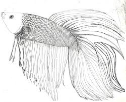 betta fish coloring page free to download 4414