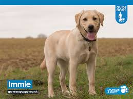 Sponsor A Puppy For The Blind Sponsor Guide Dogs Archives Compare Holiday Money
